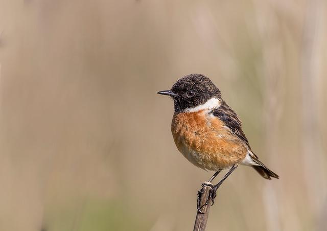 bird-1616713_640