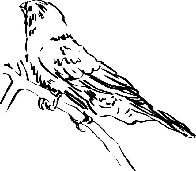bird-44554_640
