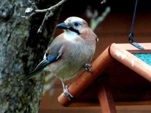 Vogelhaus Bausatz –  Worauf sollte man bei einem Kauf eines Bausatzes achten?