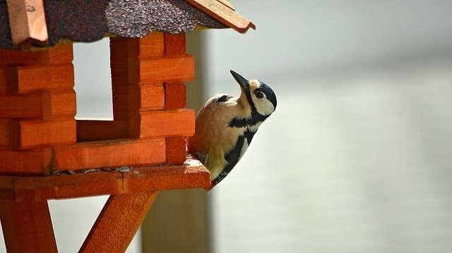 Vogelhaus mit Schindeln