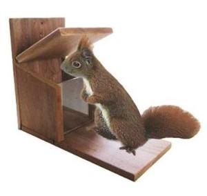 Was macht ein gutes Eichhörnchenhaus aus?