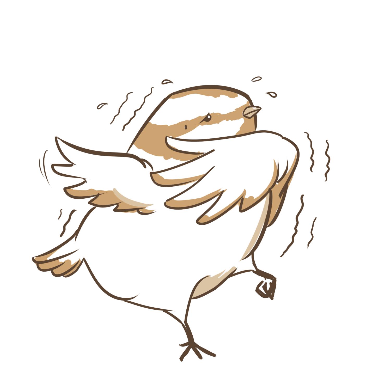 Vogel Fressfeinde