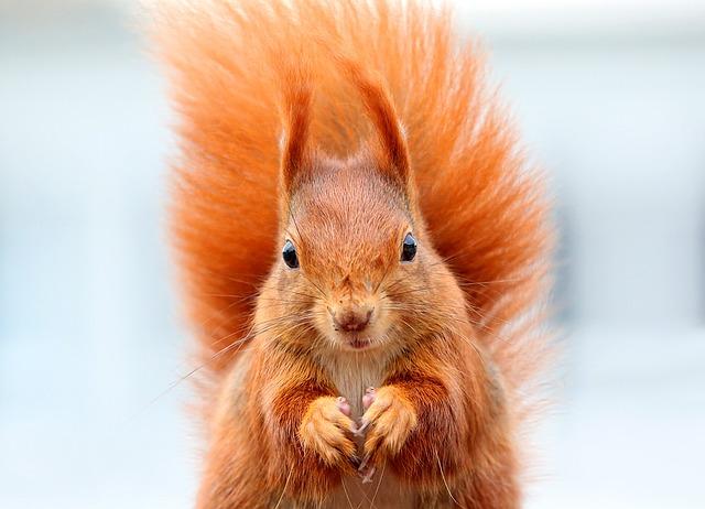 squirrel-1395315_640