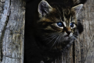 Wildvögel gegen Katzen schützen
